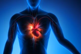 Illustration des Herz-Kreislaufsystems im menschlichen Körper