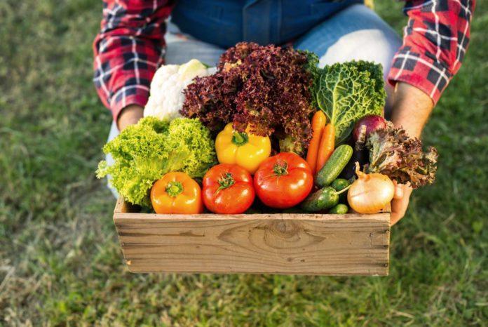 Nachhaltige Ernährung - Mann hält Gemüse in Holzkorb aus deutscher Landwirtschaft
